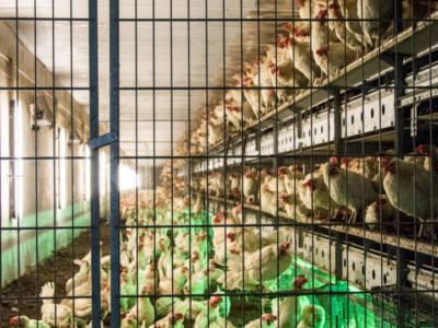 Zastosowanie płyt warstwowych w budownictwie rolniczym