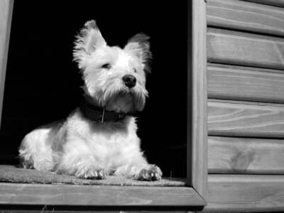 Ocieplenie budy dla psa